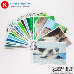 Hop-Flashcard-KatchUp-Tieng-Anh-cho-be-chu-de-dong-vat-hoang-da