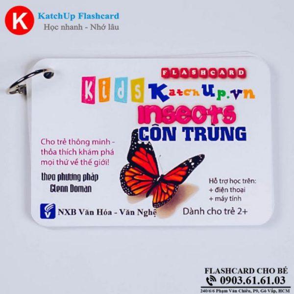 Hop-Flashcard-KatchUp-Tieng-Anh-cho-be-chu-de-con-trung